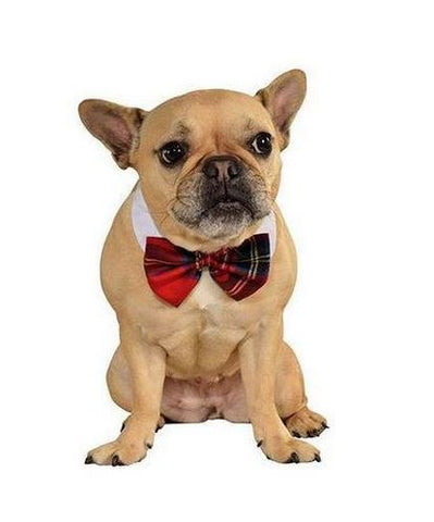 Rubie's Pet Costumes - Red Plaid Bow Tie