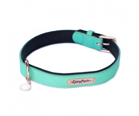 ZippyPaws - Vivid Collection Collar Teal - Various Sizes
