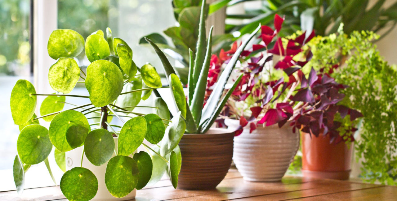 6 Great Ways to Include Plants to Your Home