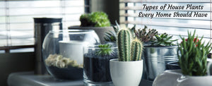 Types of House Plants Every Home Should Have