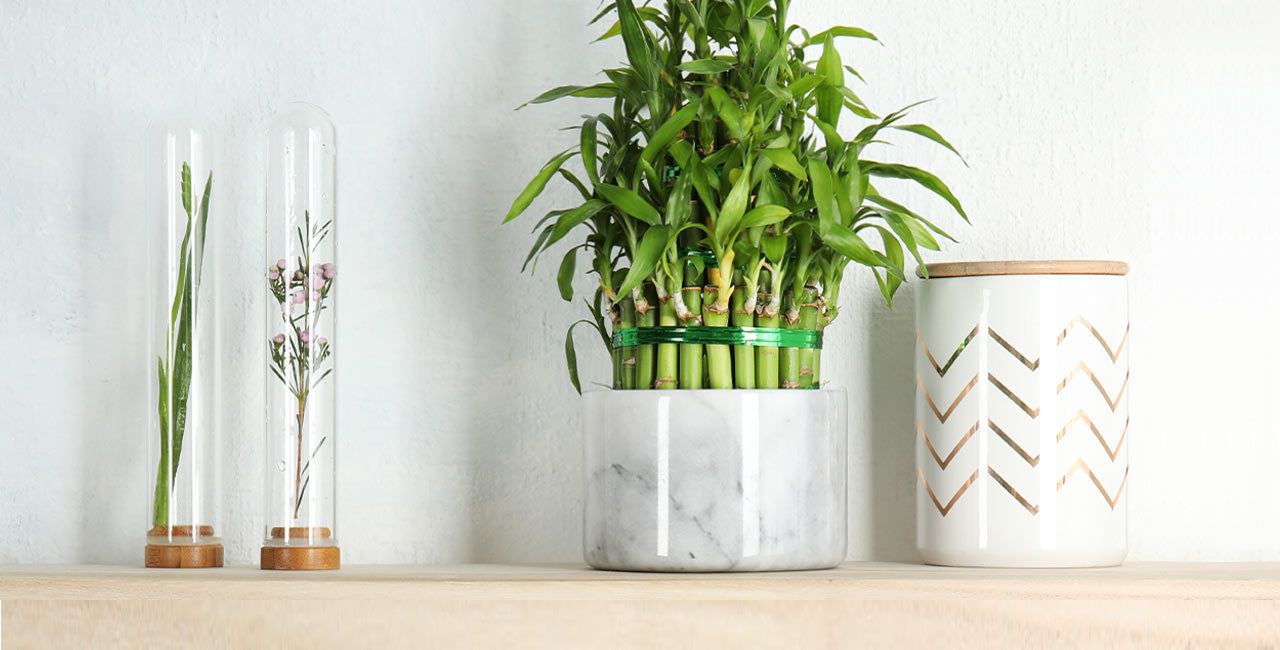 Lucky Plants That Bring Health, Wealth, and Love to Your Home