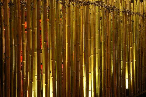 5 Interesting Facts About Bamboo