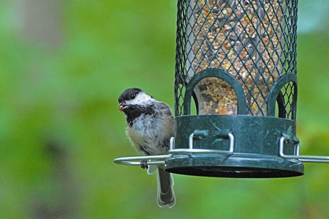 Birdfeeder ideas for this summer
