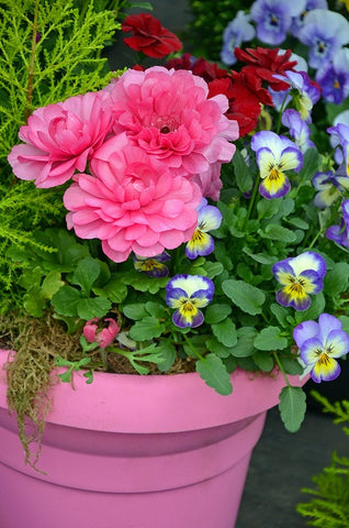 How to use decorative flower pots and planters