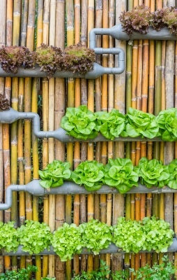 vertical gardens using planters