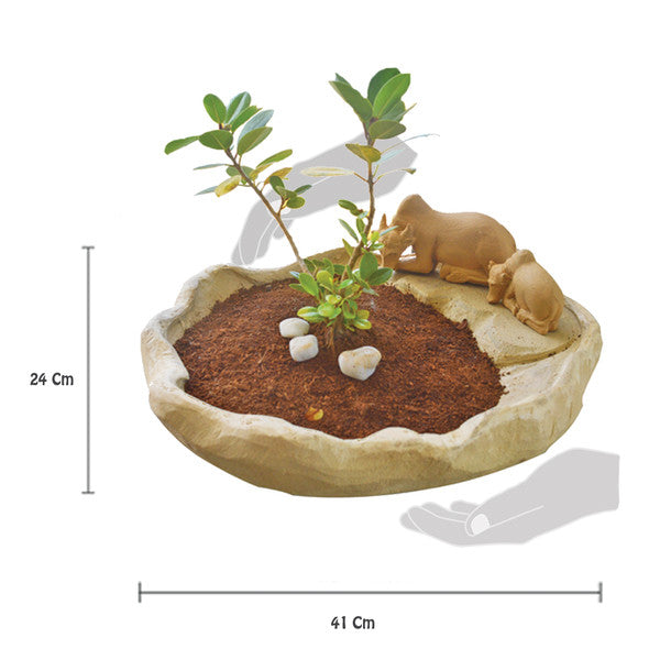 Bonsai Maadu Planter pot