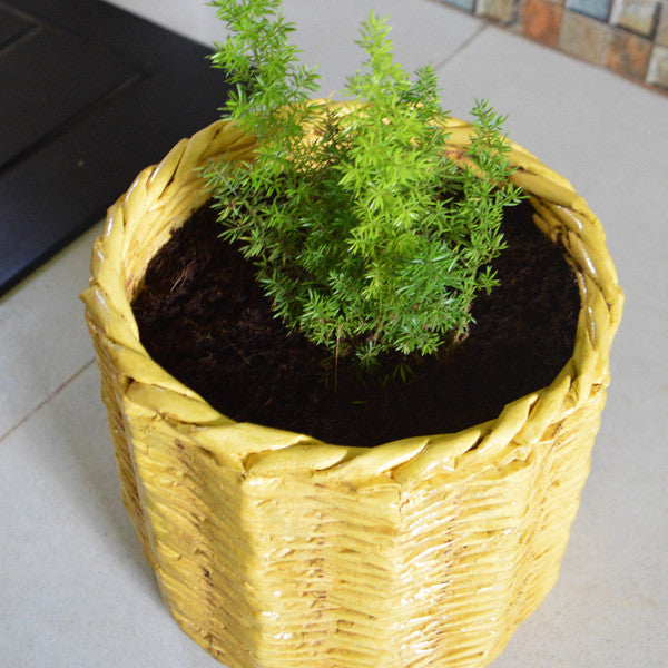 Pinnal Designed Planter Pot