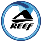 Shop Reef Men's and Women's Sandals