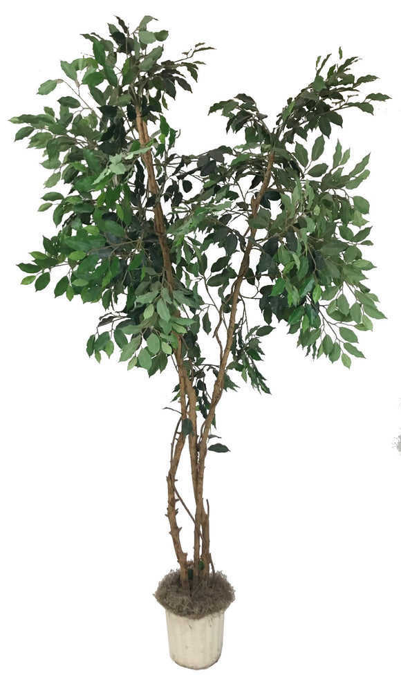 Green 7' Ficus Silk Tree - Artificial