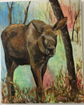 Moose Calf, Oils