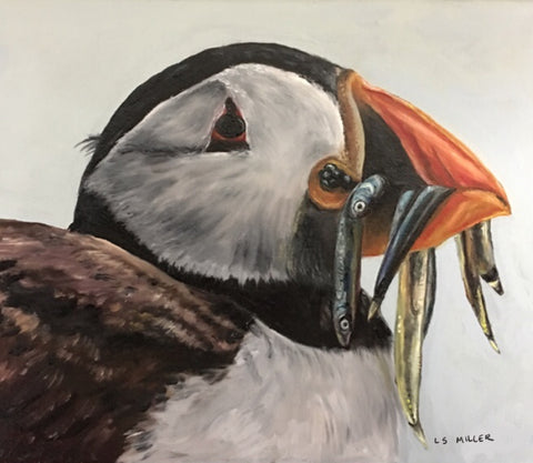 Puffin original oil painting