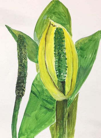Skunk Cabbage pARTy