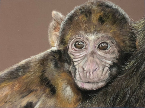 Monkey Shines, Original Pastel