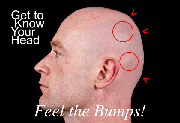 Get to know your head, feel the bumps!