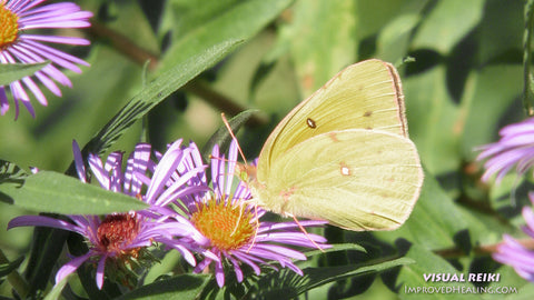 """Visual Reiki photo - """"Yellow Butterfly on a Pink Flower"""""""