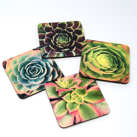 Succulent Coasters - Set of 4