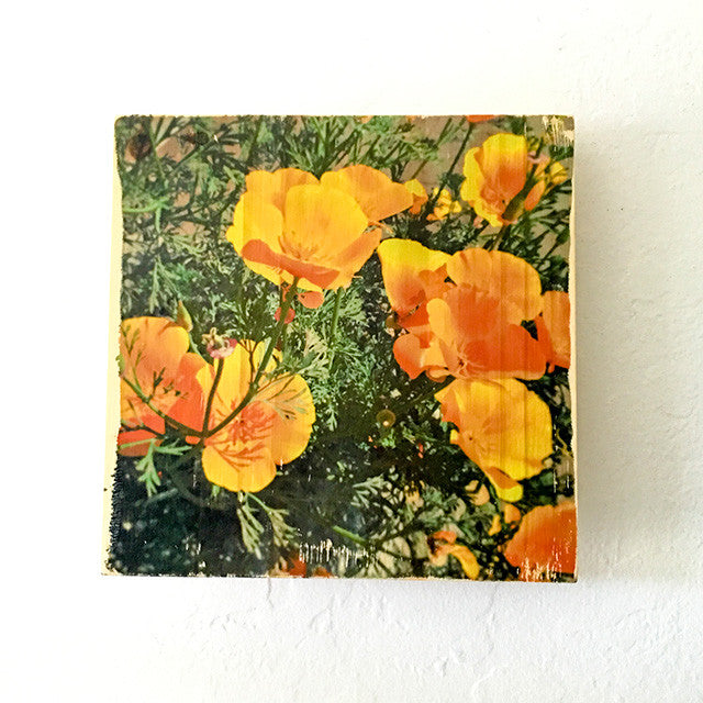 Springtime Golden Poppies, California State Flower - Square or Rectangle