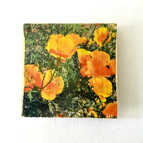 Springtime Golden Poppies, California State Flower - Rectangle