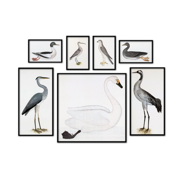 Vintage Birds Print Set of 7