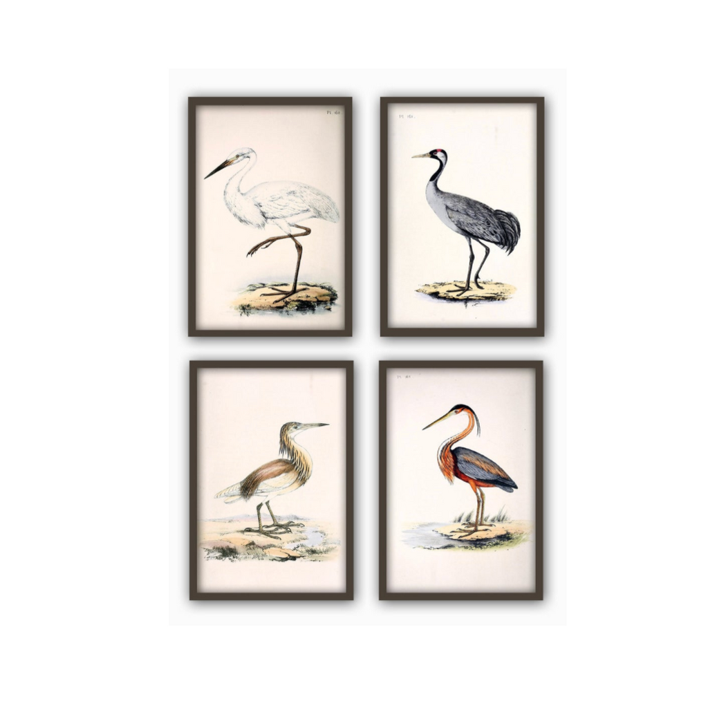Antique Bird Large Scale Print Set