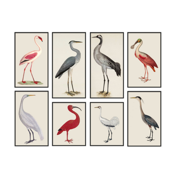Ibis Birds Print Set of 8