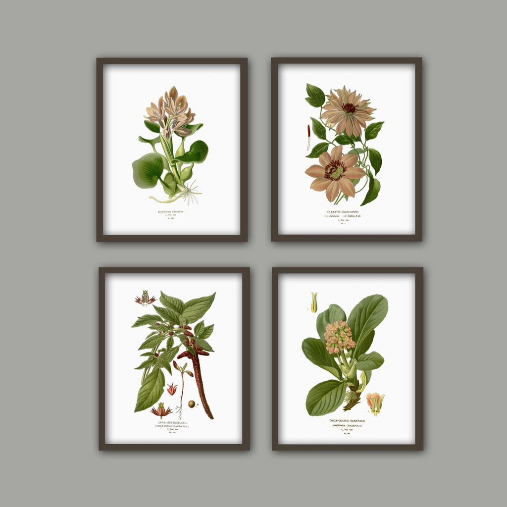 Vintage Botanical Prints in Pink