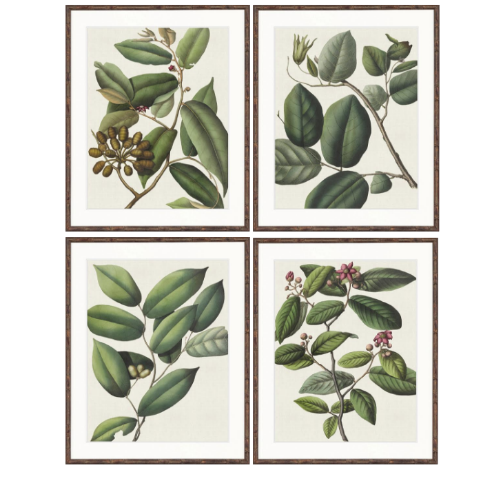 Botanical Von Mueller Collection Prints