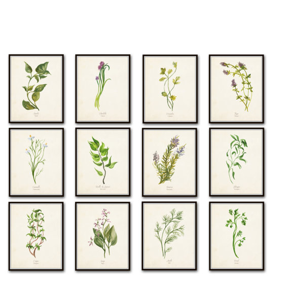 Set of Framed Herb Prints