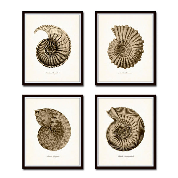 Sepia Seashell Prints Set of 4
