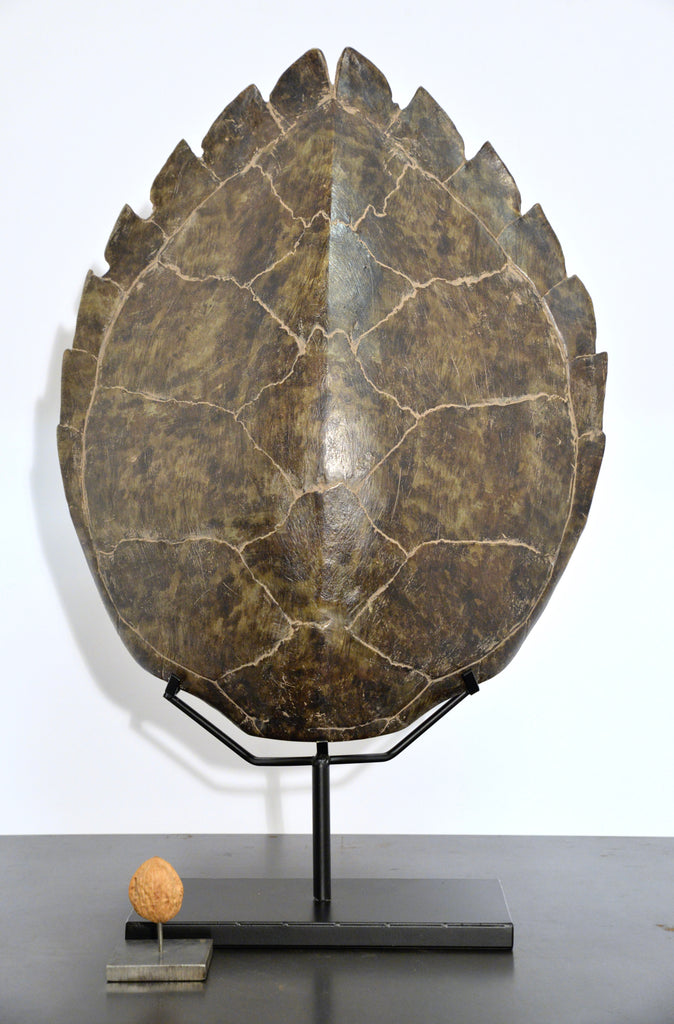 Turtle shell on stand medium (resin)