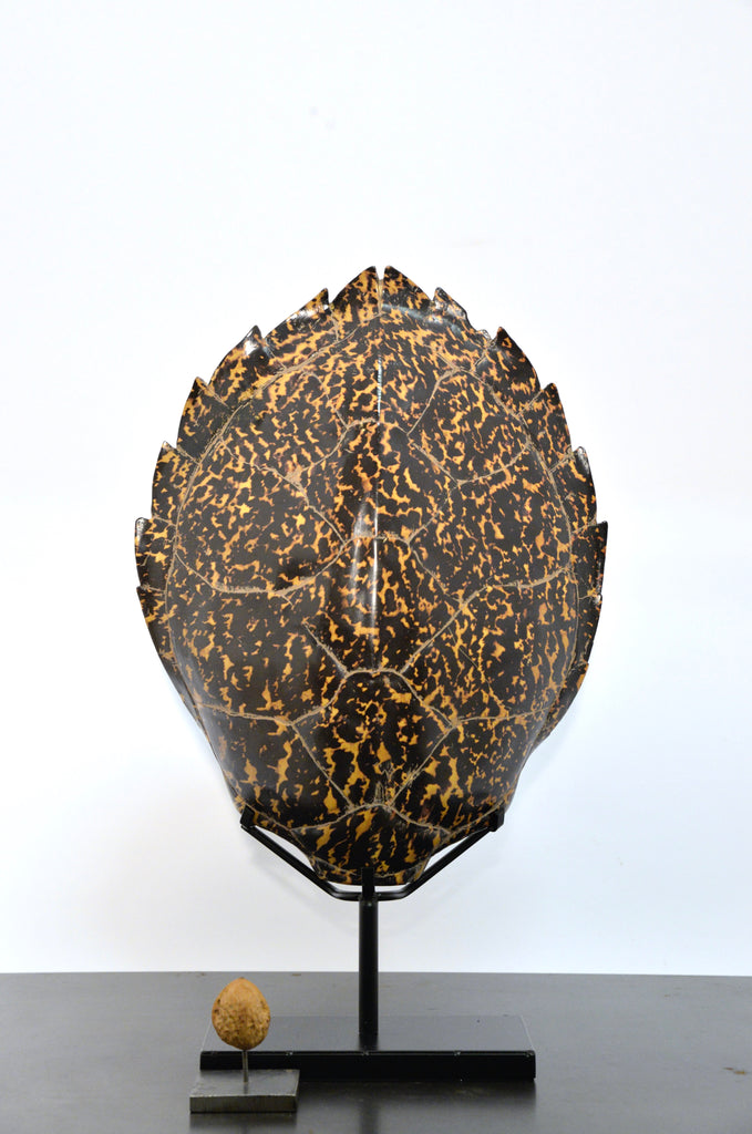Hawksbill sea turtle shell on stand (resin)