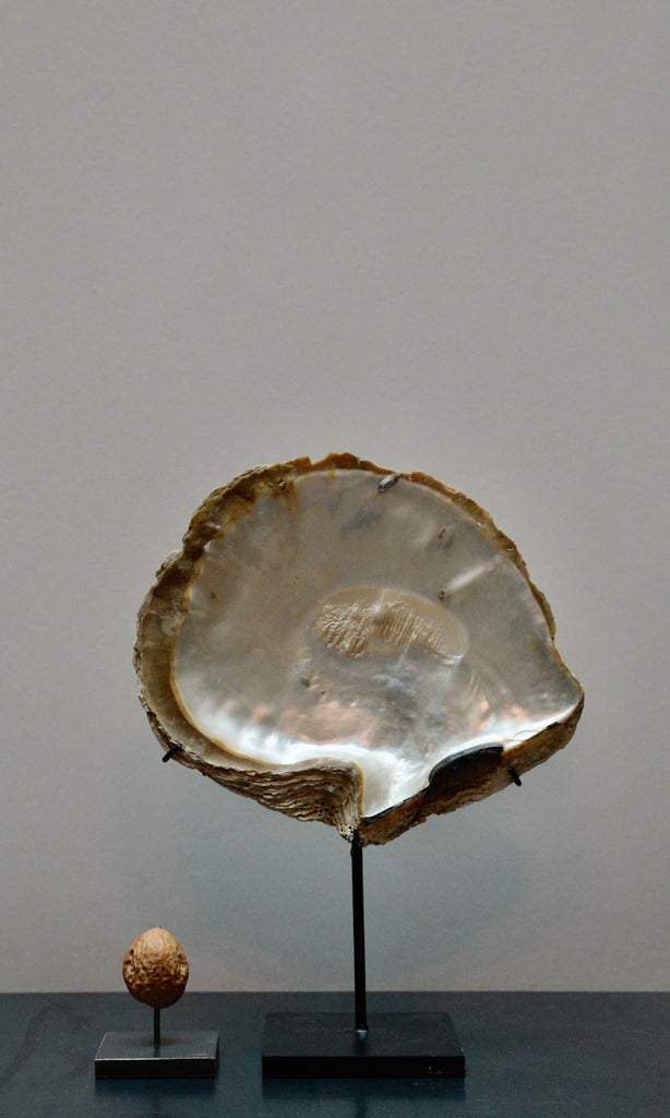 Oyster shell on base