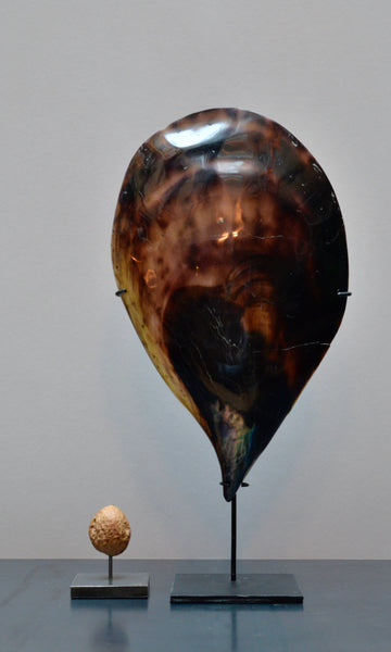 Pen mussel shell polished on stand