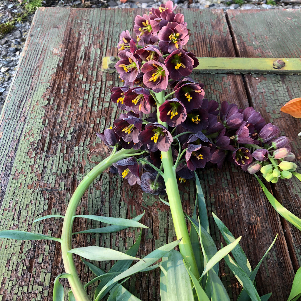 The Wunderkammer Urban Farm Bouquet medium