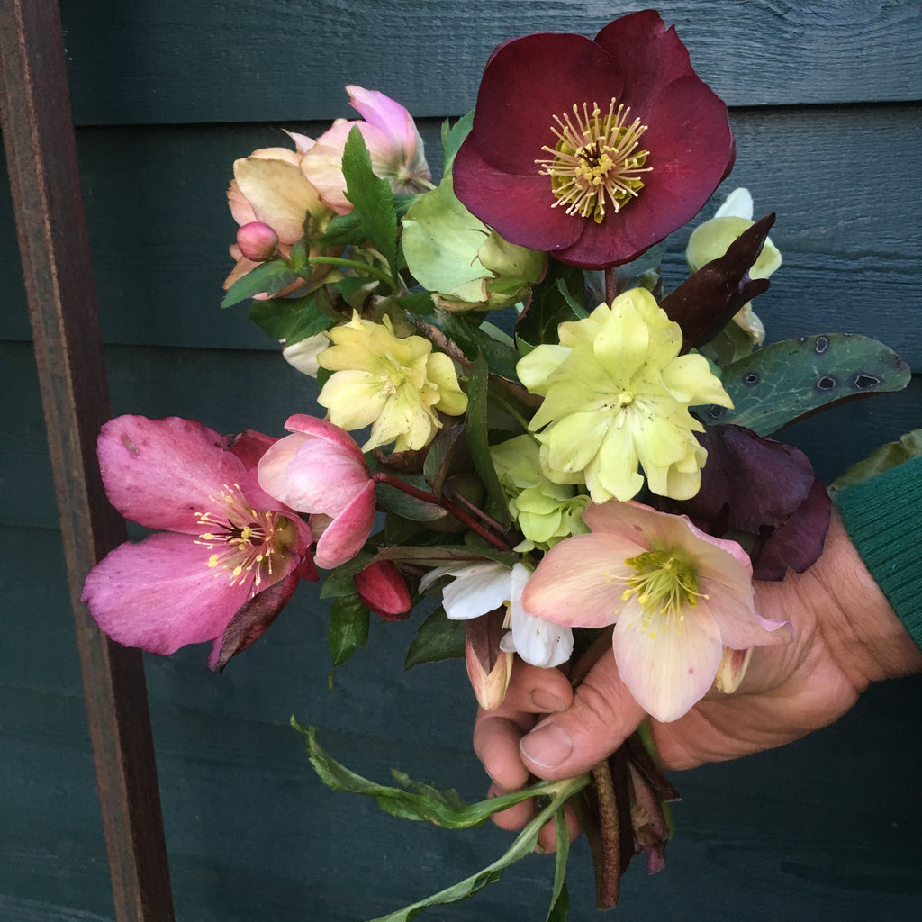 The Wunderkammer Urban Farm Bouquet small