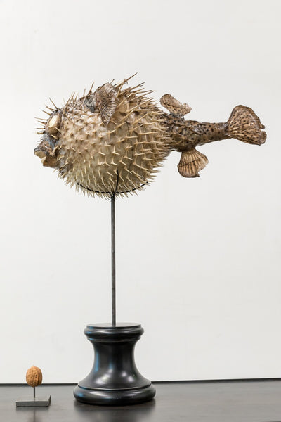 Object - Blowfish On Wooden Base
