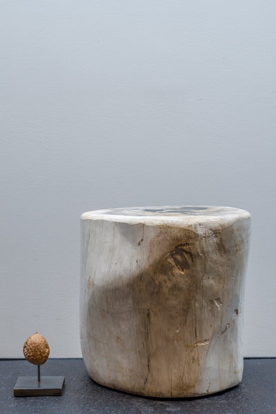 Object - Fossil Wood (white Brown)