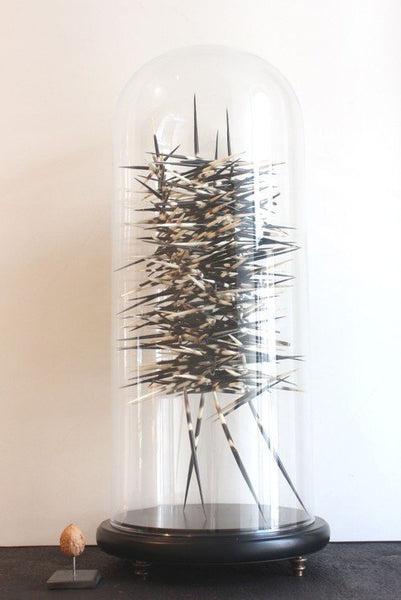 Object - Porcupine Art