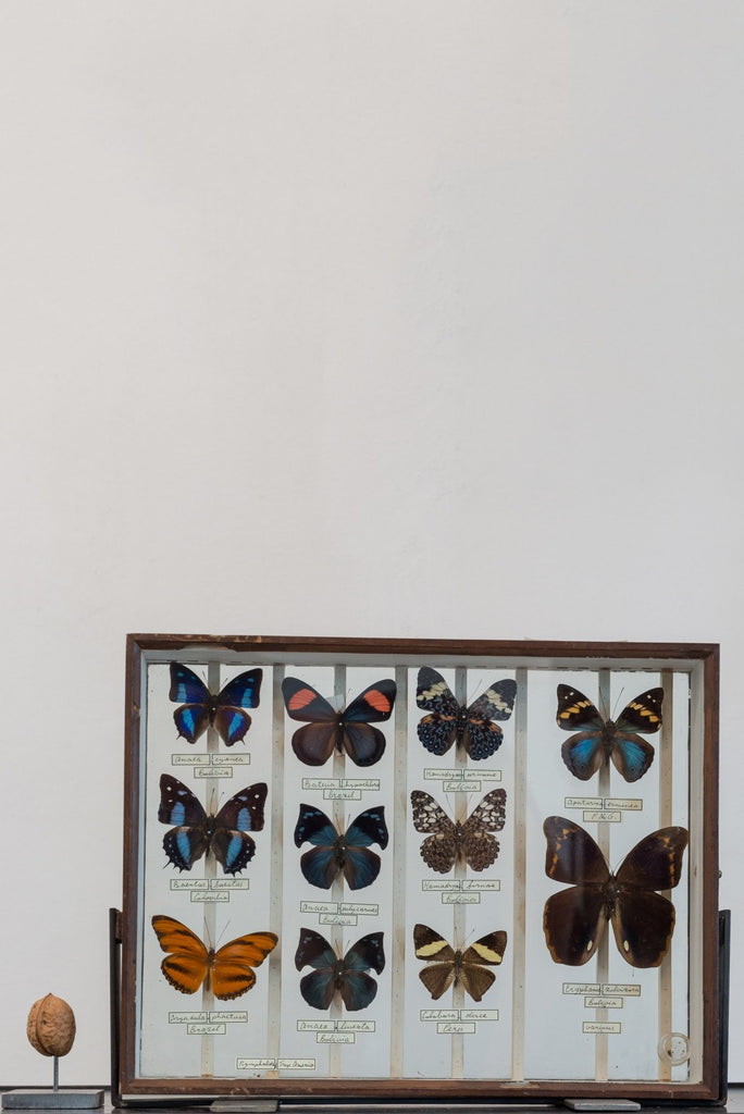 Object - Vintage Butterfly Collection Of 11 In Wooden Frame