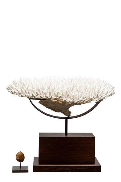 Object - White Coral
