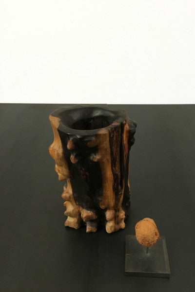 tree trunk vase pot conifer wood light