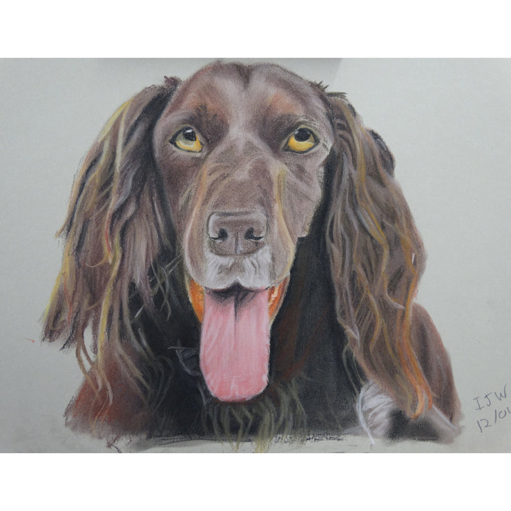Red setter pastel drawing