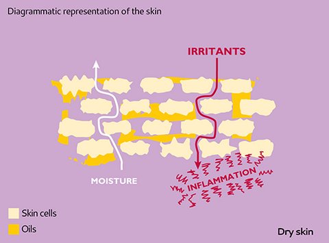 emollients and dry skin structure