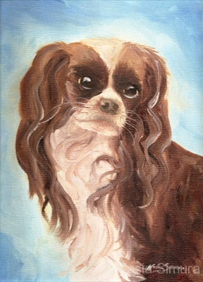 Dazzler - Portrait of a King Charles Cavalier: Oil Painting by Kasia Simura