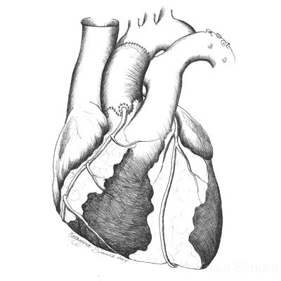 Heart: Science Illustration by Kasia Simura, created for University of Minnesota faculty