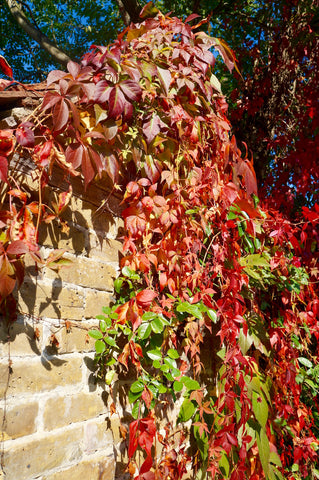 Autumnal garden - the jobs not to do by Denys & Fielding