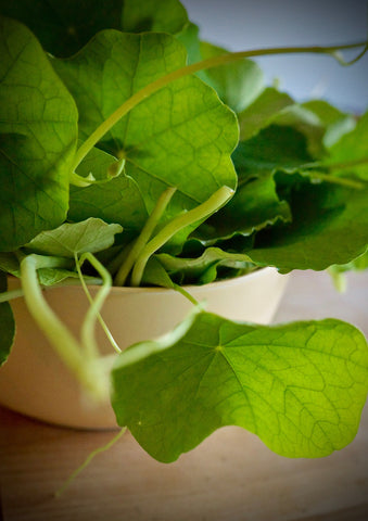 how to make home made nasturtium pesto
