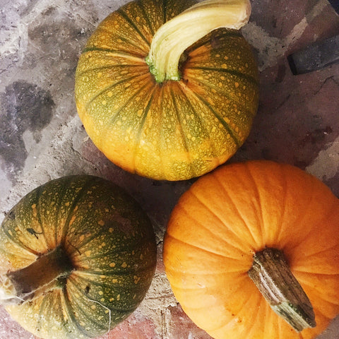 homegrown pumpkins - Deny & Fielding