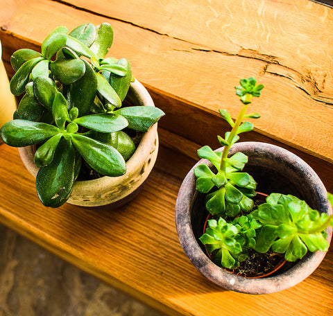 Looking after your house plants