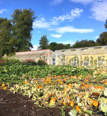 Kitchen garden at Forde Abbey